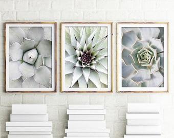 Cactus Prints, Set Of 3 Prints, Cacti, Succulent Print, Botanical Photography, Cactus Print, Wall Art, Cactus, Minimal, Scandi, Australia