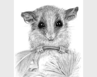 Australian pygmy possum A4 art print, wall art, home decor, nursery decor