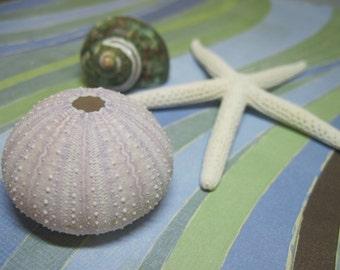 Purple Sea Urchin - White Starfish - Sea Stars and Teal Turbo Seashell- Mixed Lot