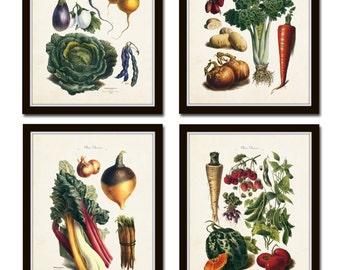 French Vegetable Print Set, Giclee, Art, Illustration, Botanical Prints, Wall Art, French Vegetable Prints, Kitchen Art, Vegetable Prints