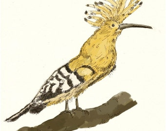 bird art - odd bird series - hoopoe - 8X8 giclee art print