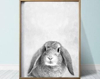 Bunny Print Bunny Poster Poster Wall Art Print Animal Print Bunny Art