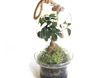Bonsai Capsule Terrarium