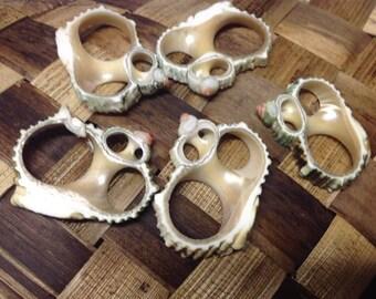 Center Cut Silver Mouth Turbo Seashells.