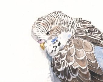 Budgerigar Print of watercolor painting Parakeet A3 wall art print - bird art print wall art print - bird art - art print - wildlife print
