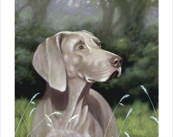 Weimaraner Dog Portrait. Limited Edition Print. Personally signed and numbered by award Winning Professional artist JOHN SILVER. jsfa002