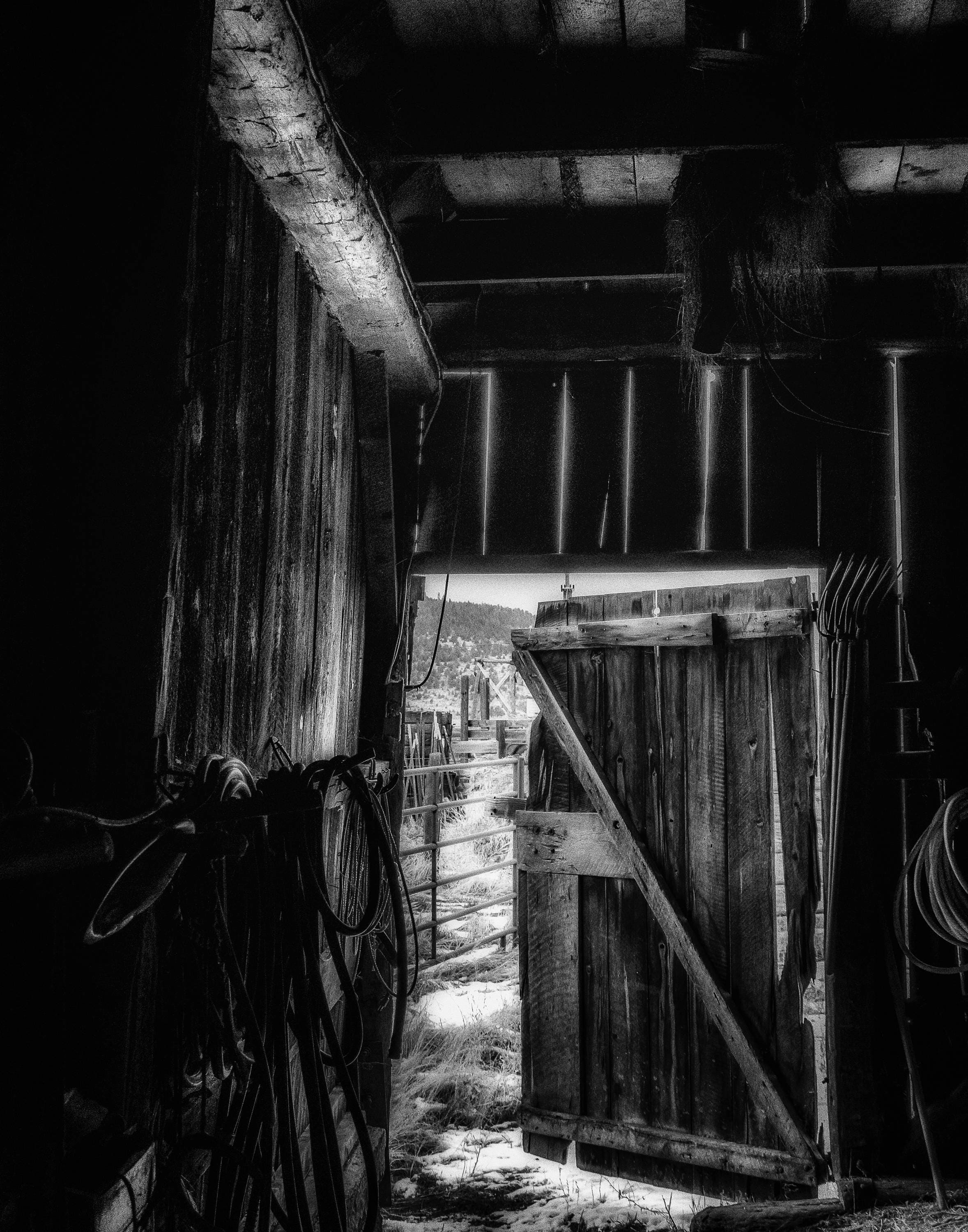 Did You Grow Up In A Barn Prints Black And White Photograph Of
