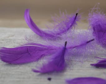 Ultra Violet Feathers 50pics Purple Feathers Natural Feathers Decorative Feathers Craft Supplies Craft Feathers Wedding Bouquet Feathers