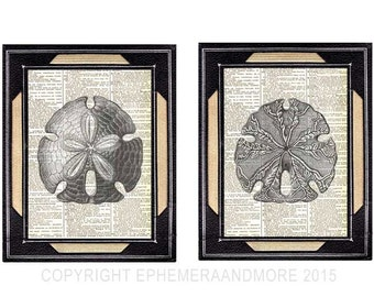 SAND DOLLAR sea cookie 2 art prints natural science Nautical ocean marine SHELL black white wall decor on vintage dictionary book page 8x10