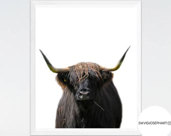 Highland Cow Print, Highland Bull Print, Living Room Decor, Nursery Wall Art, Cattle Photography, Digital Download, Highland Cow Printable