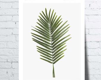 Shows journal Palm (leaf), tropical wall art, photo, poster, botanical decor