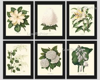 Botanical Flower Print SET of 6 Art 8X10 White Magnolia Lily Hydrangea Flower Antique Summer Garden Plant Home Wall Room Decor to Frame