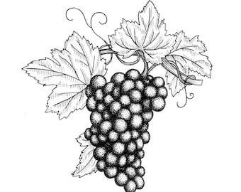Grapes Orignal Drawing
