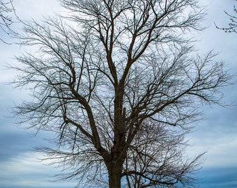 Fine Art Photography Print Trees Sky Marsh Wetlands Ohio