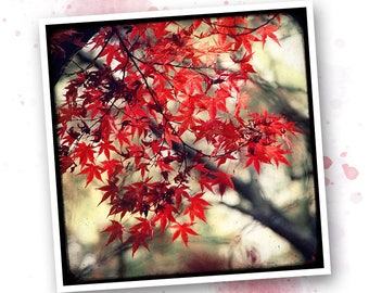 The Japan Maple - Nature - photo art signed 20x20cm