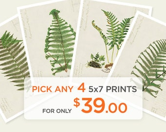 Special Promo - Any 4 5x7 Prints for only 39 dollars