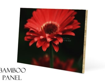 Wood Wall Art-20x30-Red Wall Art-Photo Mounted on Wood-Eco Friendly Artwork-Floral Wall Decor-Bamboo Panel-Flower Photograph-Daisy Wall Art