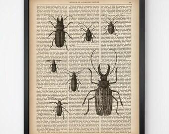 Insect illustration vintage, Print on dictionary, Entomology print, Wall art vintage, Printable print, Instant download, 8x10, 11x14 print
