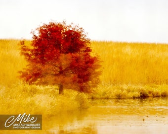 Fall Tree - Photograph