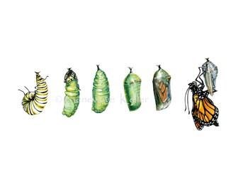 Monarch Butterfly Art Print, Archival Illustration Print of original watercolor