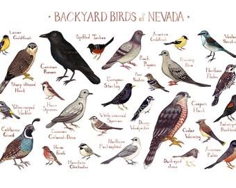 Nevada Backyard Birds Field Guide Art Print / Watercolor Painting / Wall  Art / Nature Print