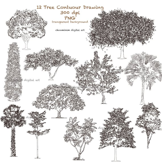 Contour Line Drawing Tree : Stylised tree contour line drawing clipart clip art