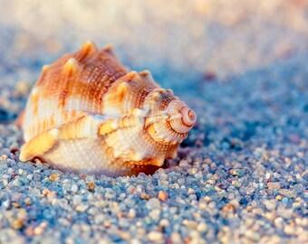 Golden Hour Seashell