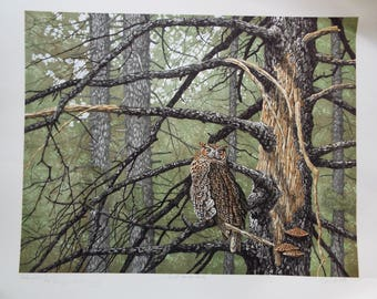 Chris Forrest  Great Horned Owl VINTAGE LITHOGRAPH Signed