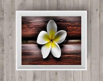 Wooden Frangipani Flower Photography Digital Print Photography Downloadable Photography Flower Print