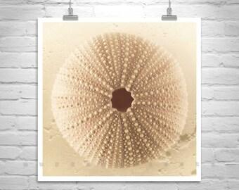 Seashell Picture, Bathroom Wall Decor, Sea Shell Art, Bathroom Art Picture, Shell Photograph, Beige Art, Square Art, Sea Urchin Decor