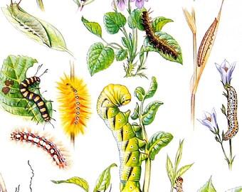 Caterpillars -  1985 Butterfly Book Page - World Butterflies Book - 12 x 8