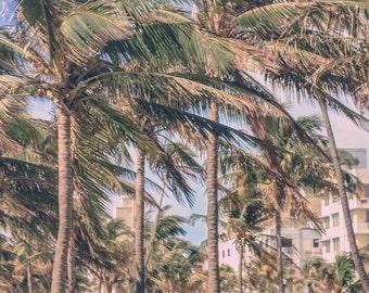 Palm Tree Print, South Beach Photography, The Palms of Ocean Drive  South Beach Miami, Beach Decor, Cottage Decor