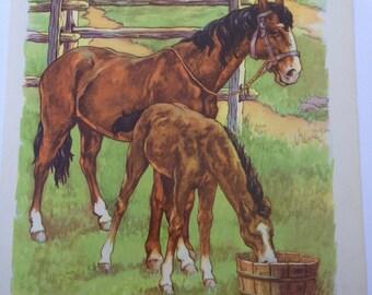 Such A Thirsty Little Colt - A Clara M Burd Vintage Print 1930 Childrens Book Print