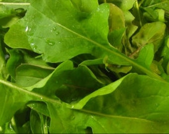 Arugula- Rocket Salat (Roquette) Heirloom Seeds-