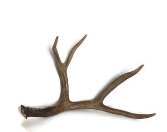 Deer Antler / Shed Antler / Natural Antler (#167)