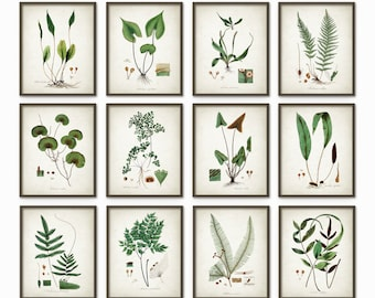 Green Plant Prints Set Of 12 - Antique Botanical Green Art Posters - Botanical Decor - Plant Book Plate Illustration - AB54