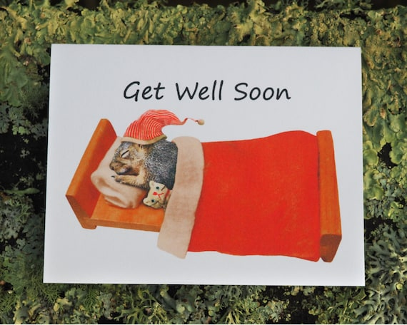 Image result for Get well squirrel