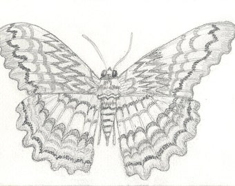 Pretty Moth - set of 5 note cards and envelopes