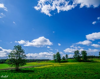 Windows background ,Landscape photography of a abstract trees and hills made in Sweden