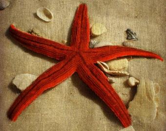 Starfish Art Print - Red Tan Beige Shells Beach House Wall Art Home Decor Photograph