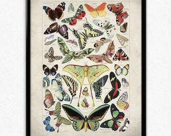 Butterflies Vintage Print 1 - Butterflies Poster - Butterfly Art - Butterflies Picture - Home Decor - Home Art - Kitchen Art (VP1059)