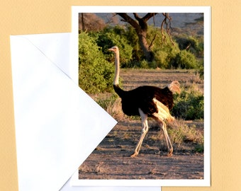 Ostrich Photo Greeting Card