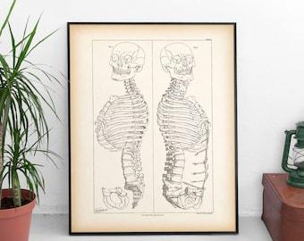 Halloween decor, Anatomy wall art, Sceleton print vintage, Halloween print, Anatomy print, Halloween printable, Instant download print