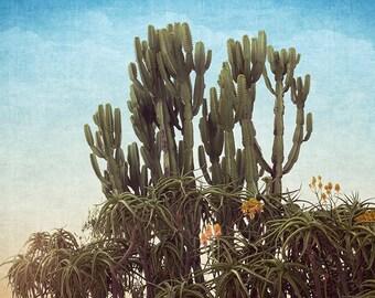 Cactus Photography, Cactus Print, Desert Photography, Desert Art, Southwestern Art, Southwestern Decor, Desert Cactus, Fine Art Photography