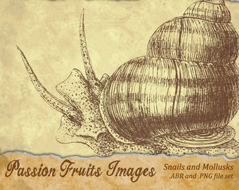Garden Snails in Shells Photoshop or Gimp Brush set ABR and .PNG files