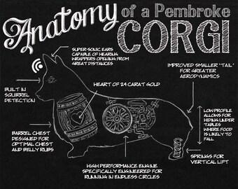 Anatomy of a Pembroke Corgi