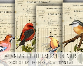 A4 Vintage Bird Ephemera Digital Collage Sheet Download -1048- Digital Paper - Instant Download Printables