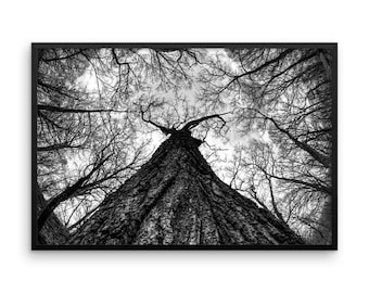 Trees of Antipodes II
