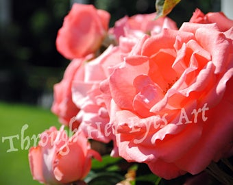 Light Pink Rose Flower Photo - Summer Flower Photography Wall Decor