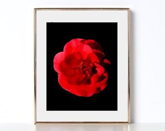 Crimson Rose Print Digital Download Printable Art Boho Wall Art Decor Wanderlust Print Tropical Wall Art Peaceful Art Feminist Feminism Art